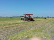 Harvesting grass