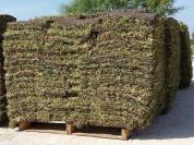 Grass on pallet