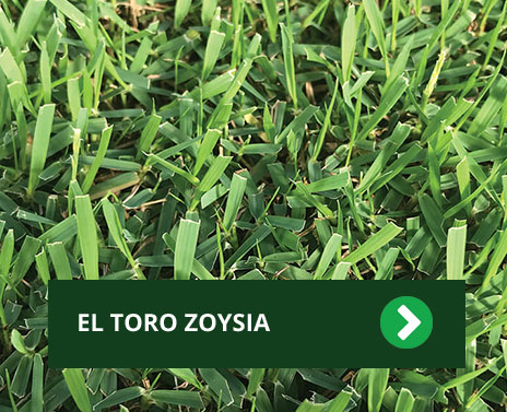 Tips Turf Grass Supplier Central Texas Turf Grower